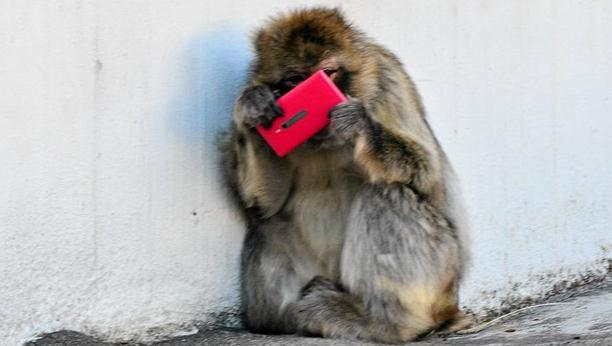 Heboh, Monyet Bermain-main Dengan Nokia Lumia 800