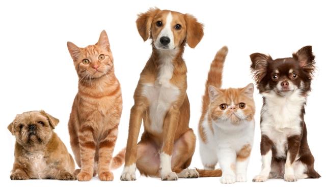 penyakit yang disebabkan oleh hewan peliharaan