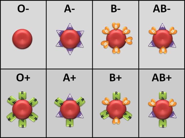 Fakta baru golongan darah (doc/algonquincollege.com)