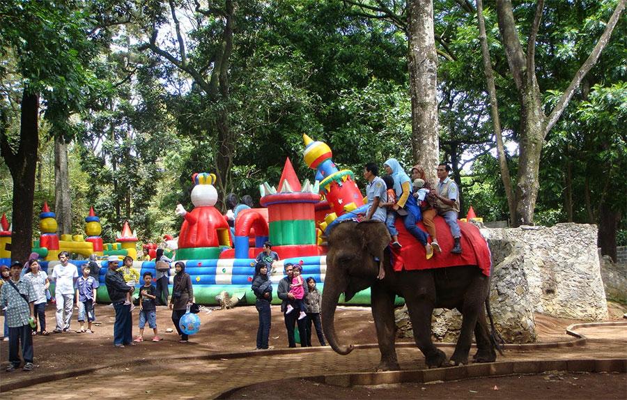 Menunggang-gajah-di-Kebun-Binatang-Bandung