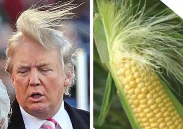 meme donald trump rambut jagung