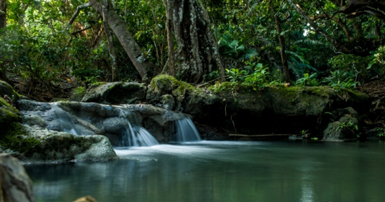 Taman-Nasional-Alas-Purwo