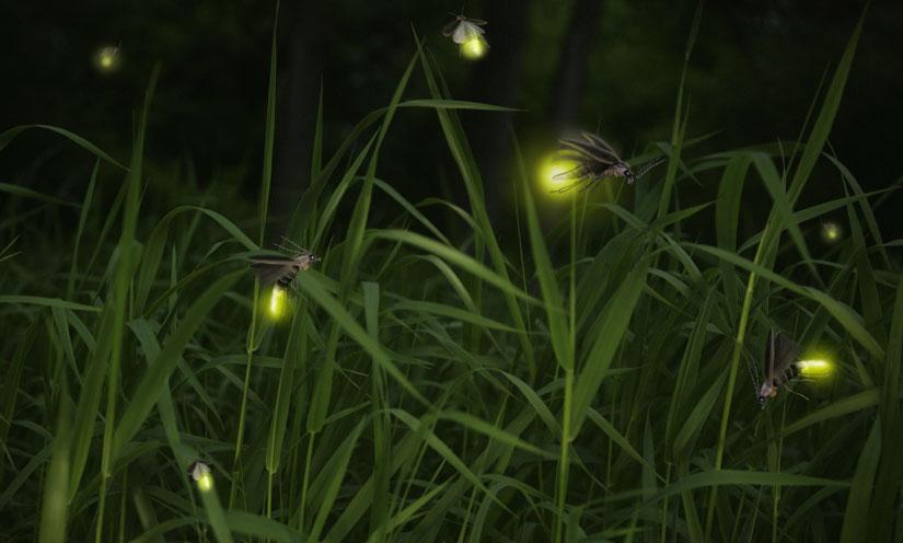 fireflies-zoom