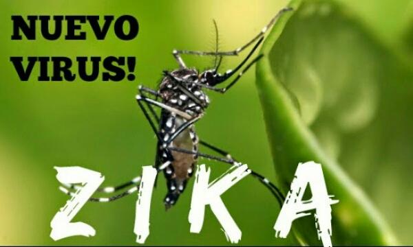 5 fakta virus zika