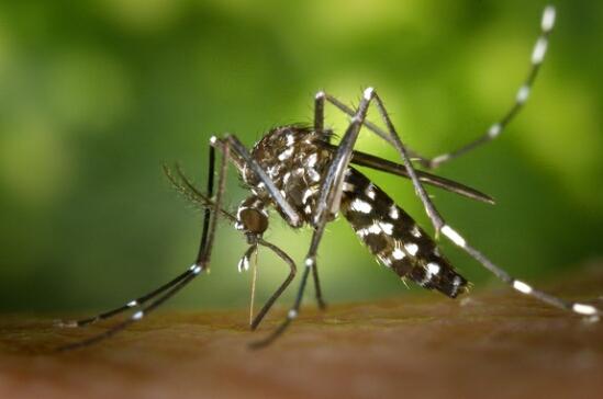 Apa Itu Virus Zika...? Yuk Bahas Lebih Lengkap!